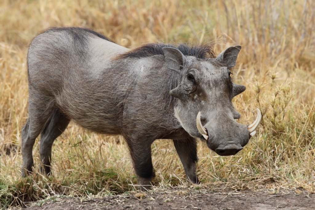 Ugliest Animals In Africa