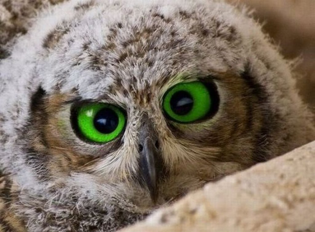 10 Amazing facts about owls