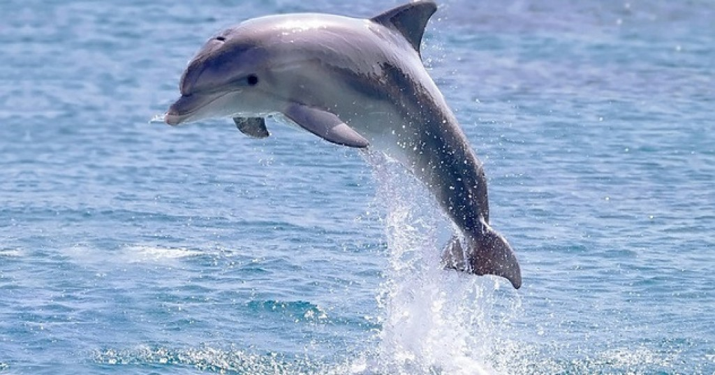 10 Dolphin Superpowers